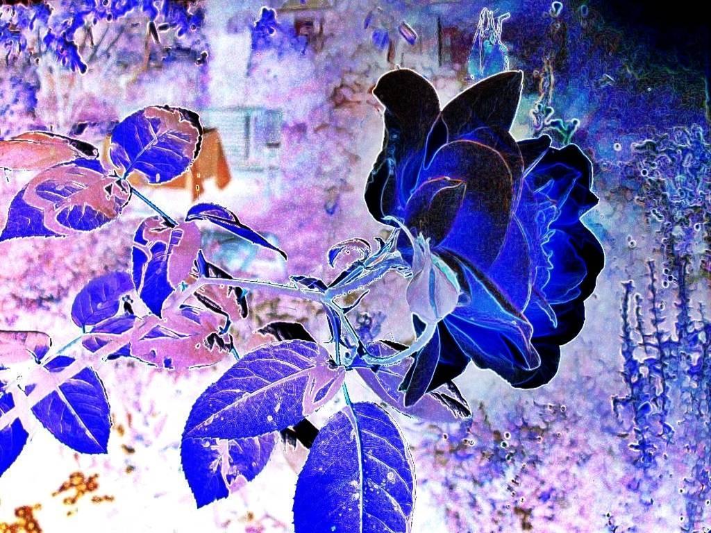 GartenOkt07 014 Aquarell dunkel