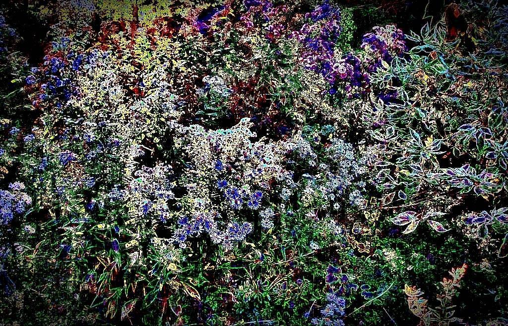 GartenOkt07 021 a Grafik dunkel