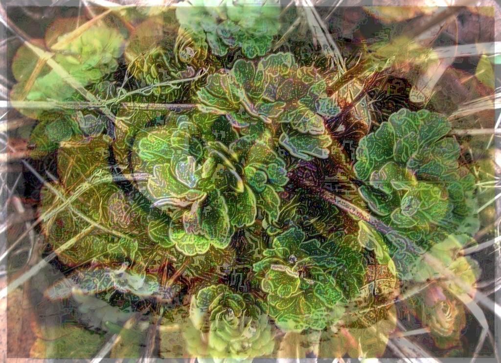 Köln 2009 006 - Kopie Aquarell Grafik b dunkel b 3 Aquarell 3 dunkel 4