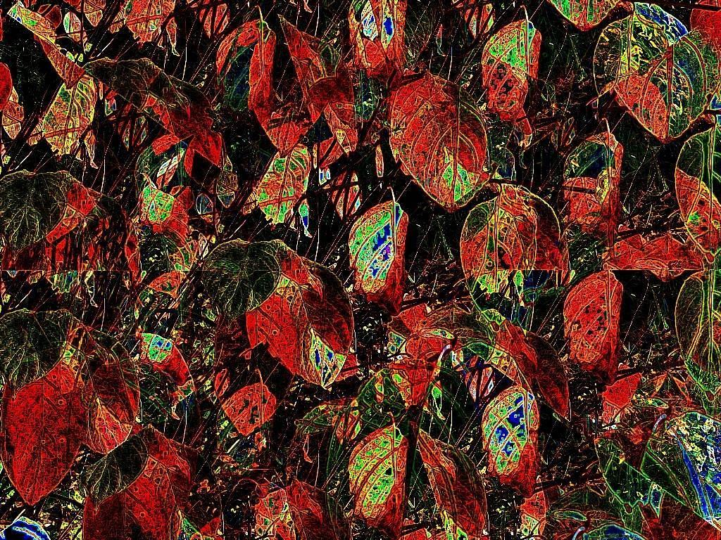 Okt08 039 Aquarell b Grafik dunkel