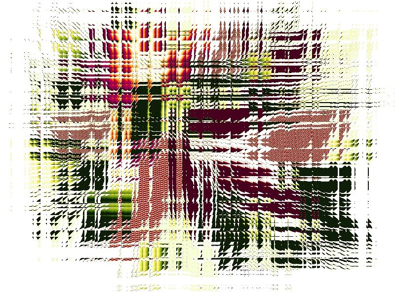 Krawattenlilie c c